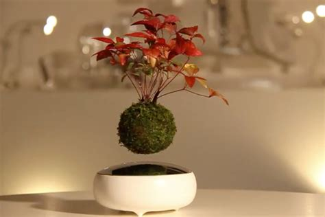 Floating Bonsai Tree - How cool is that!