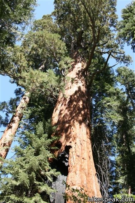 Trail of 100 Giants | Giant Sequoia National Monument
