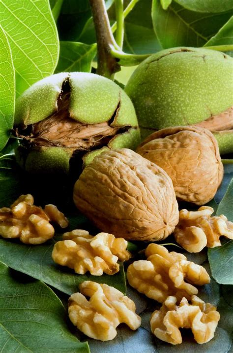 New findings support the benefits of eating walnuts on