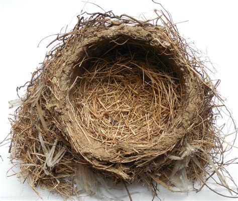 Reverse Engineering a Bird's Nest – Only Passionate Curiosity