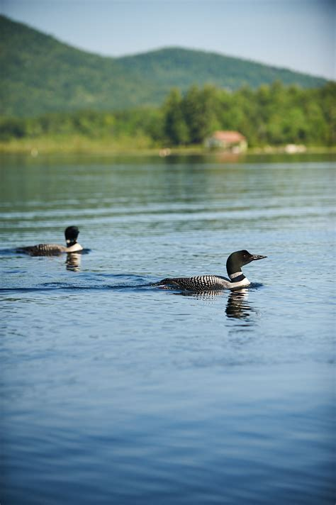 Scenes from Lake Winnipesaukee in Summer - New England Today