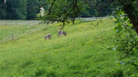 Donkey Farm and Mill - Eselsmühle - Travel, Events