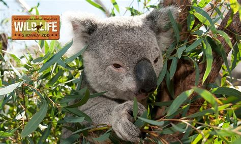 WILD LIFE Sydney Zoo in - Darling Harbour | Groupon